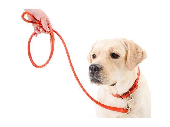 Collar Glamour Поводок для собак круглый