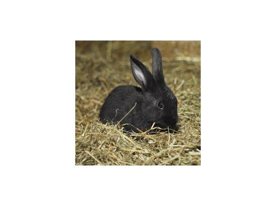 Сено луговое для кроликов и морских свинок