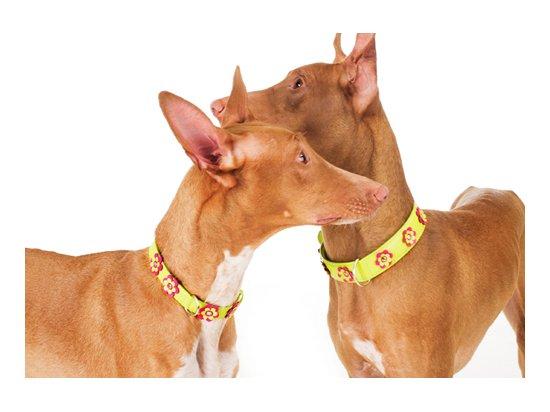 CoLLaR Glamour - кожанный ошейник для собак с украшением аппликация