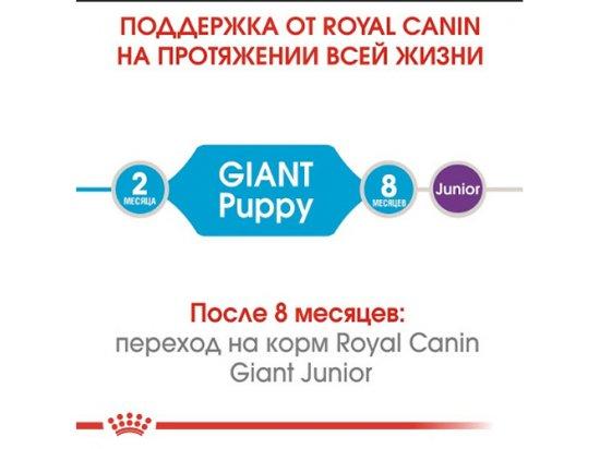 Royal Canin GIANT PUPPY корм для щенков гигантских пород от 2 до 8 месяцев