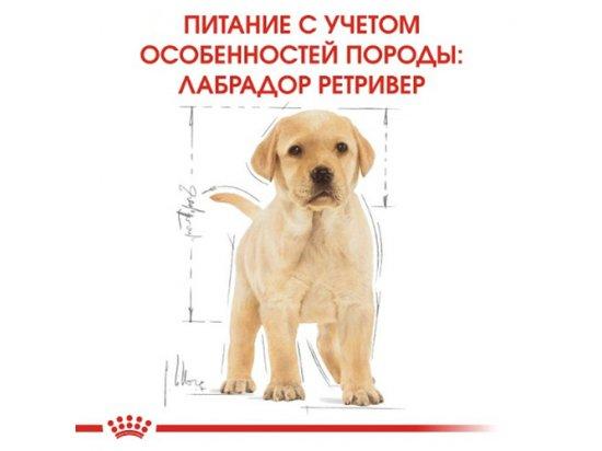 Royal Canin LABRADOR RETRIEVER PUPPY (ЛАБРАДОР РЕТРИВЕР ПАППИ) корм для щенков до 15 месяцев