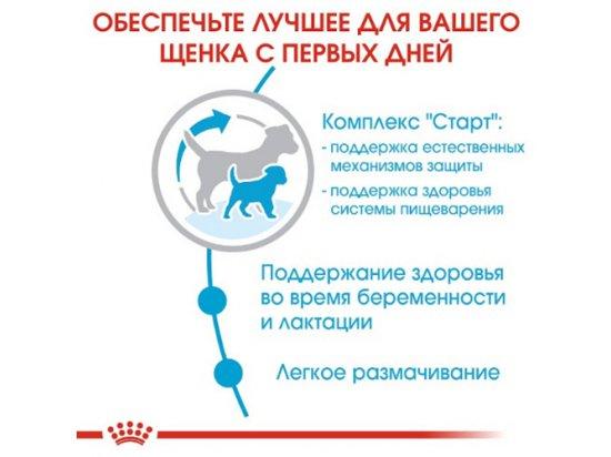 Royal Canin MINI STARTER MOTHER & BABYDOG корм для беременных и кормящих сук и щенков мини-пород
