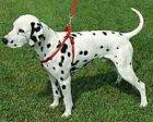 Collar Нейлоновая шлея для собак (0667-0668)