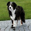 TRIXIE Walker Active Ботинки для собак (1946)