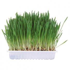 Trixie SMALL ANIMAL GRASS трава для грызунов